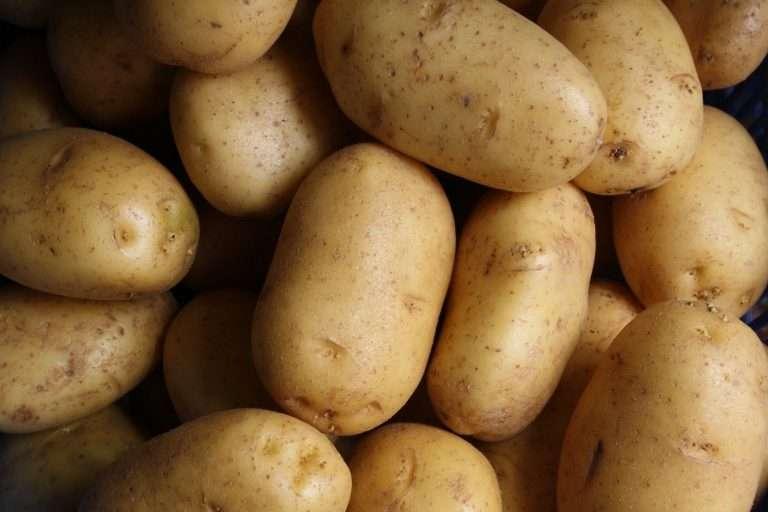 batata tem glúten
